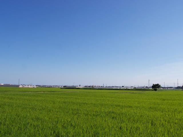 穀倉地帯の緑